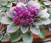 Комнатные цветы и растения в дом,  в школу,  или в офис. Недорого!